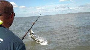 Tarpon Fishing around Jekyll Island Georgia