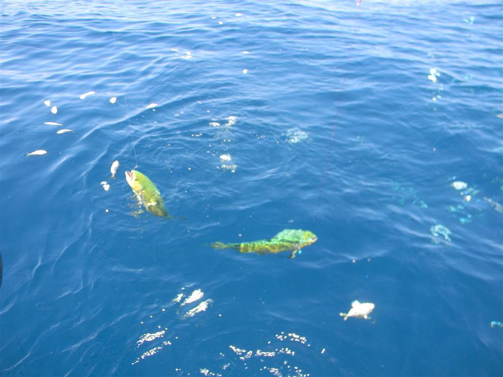 Coastal georgia fishing charters fishing photos for St simons island fishing