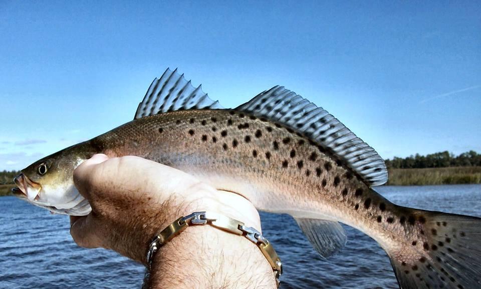 inshore-trout-fishing-B