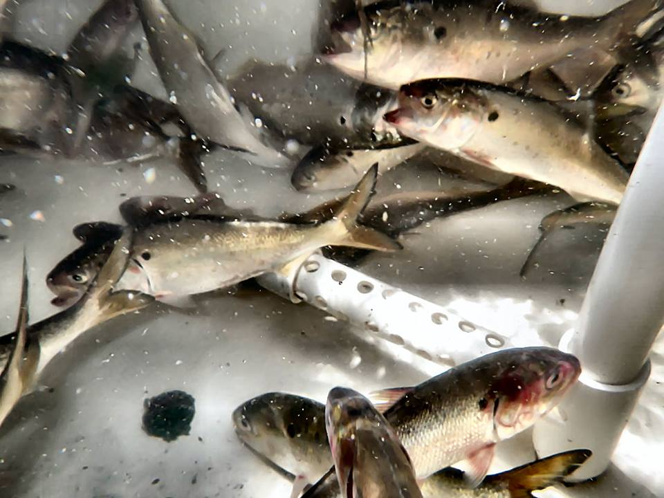 St simons island and jekyll island fishing reports for Where are the fish biting near me