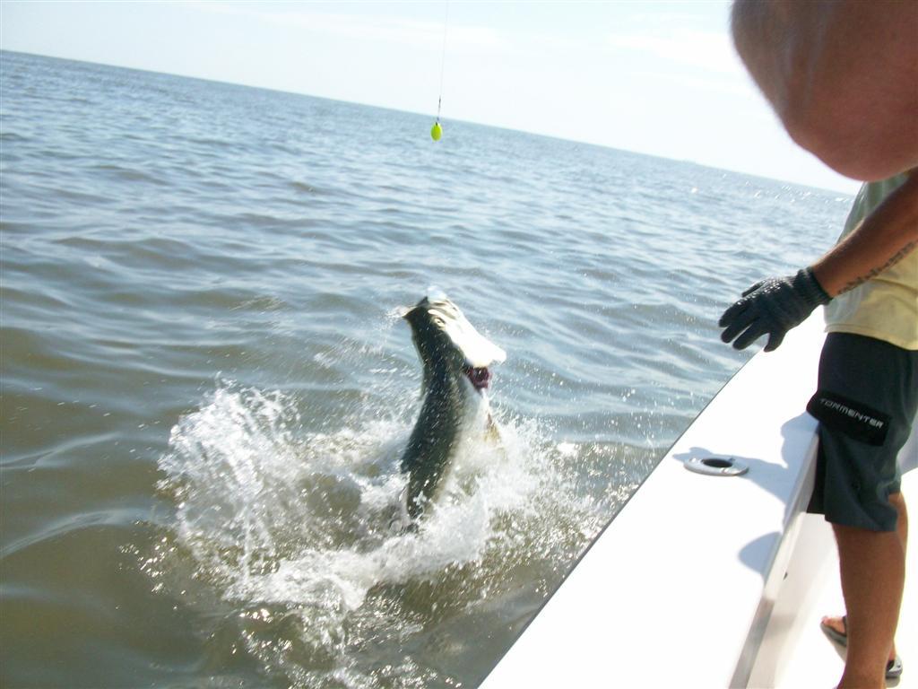 St simons and jekyll island tarpon fishing charters for Ga fishing charters