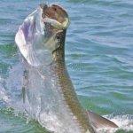 St. Simons Island Tarpon Fishing Charters