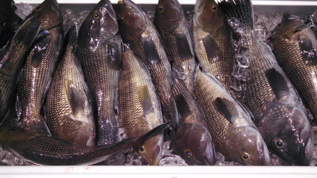 St. Simons Island Fishing Charters - Deep Sea Fishing Charters