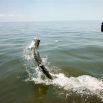 Jekyll Island Fishing Charters Tarpon Fishing Fun